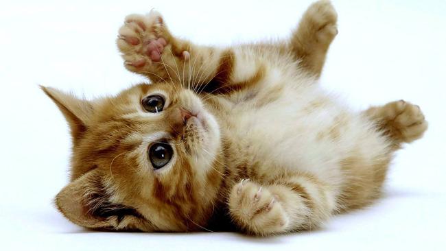 子猫 子犬 集中力に関連した画像-01