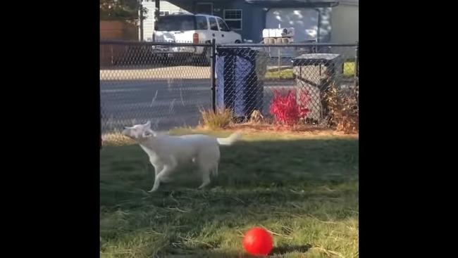 全盲 犬 感動に関連した画像-04