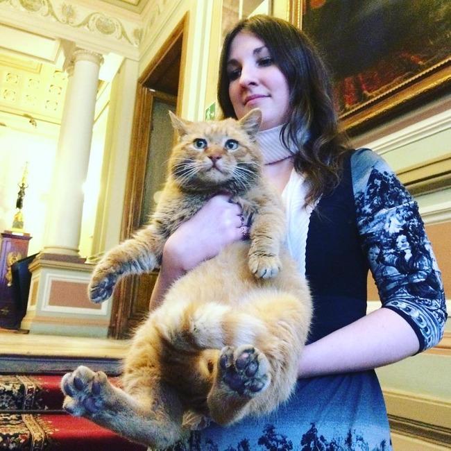 エイプリルフール 猫 従業員 本当 美術館 ロシアに関連した画像-04