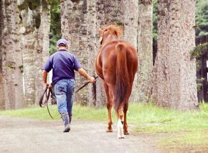 競馬 うまレター ウマ娘に関連した画像-01