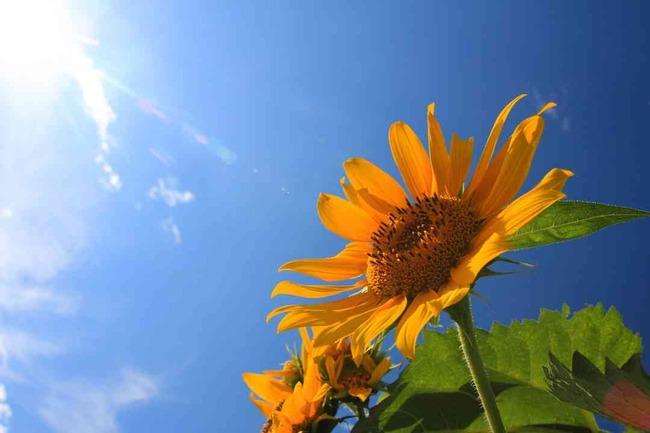 子ども 自殺 夏休み 春休みに関連した画像-01
