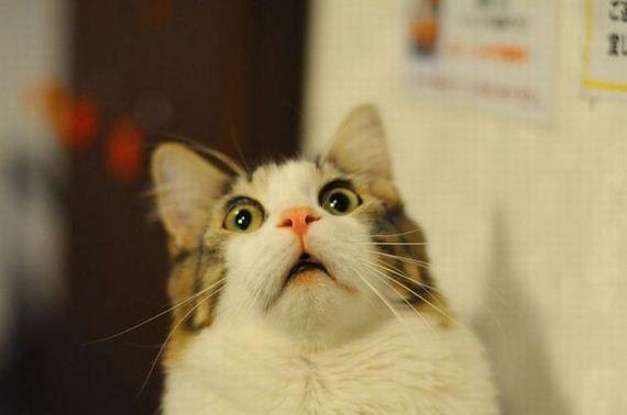 猫 臭い足 飼い主 フレーメン反応 芸人 リアクションに関連した画像-01