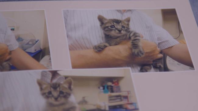 猫 かるかん 声 病気に関連した画像-03