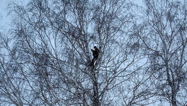 ロシア 学生 木の上 オンライン授業に関連した画像-01