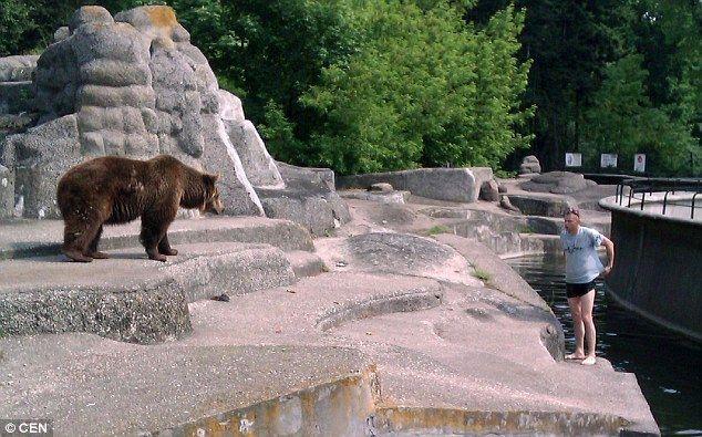 熊 乱入 に関連した画像-03