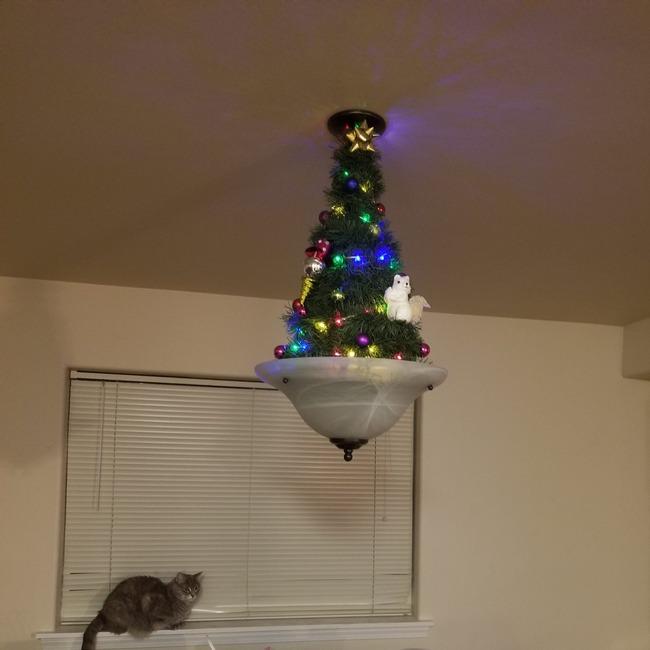 クリスマスツリー 猫 ネコ 対策に関連した画像-04
