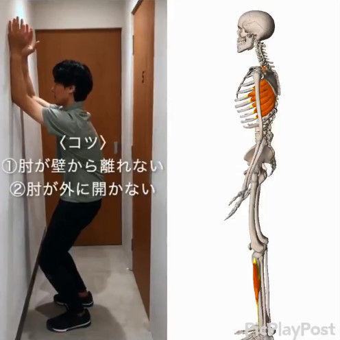 体操 ストレッチ 1分 猫背 反り腰 肩こりに関連した画像-02