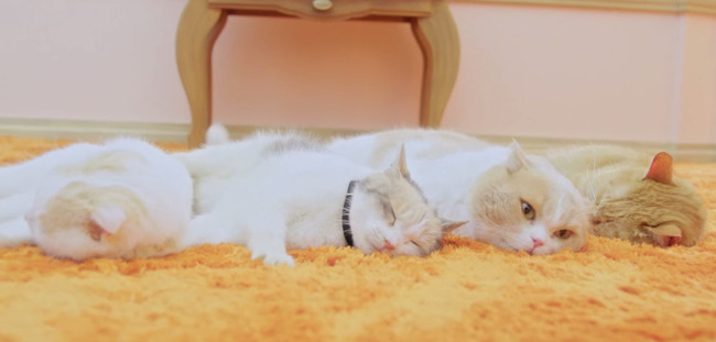 au ネコ にゃにゃにゃにゃ食堂 小岩井ことり 阿澄佳奈に関連した画像-09