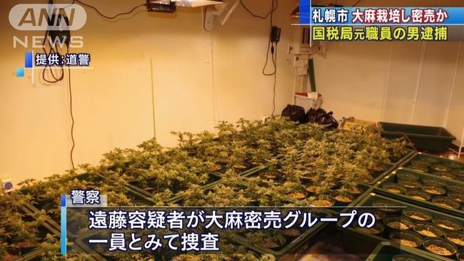 元国税職員 大麻密売 栽培に関連した画像-07