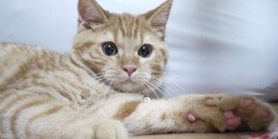 猫 ペットに関連した画像-01