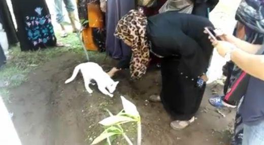 【動画】飼い主の葬儀で必死に墓を掘り返そうとする猫が切なすぎる…