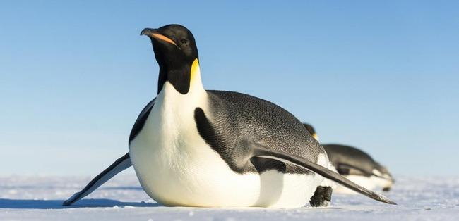 オーストラリア 水族館 ペンギン 雄同士 ペア 卵 ひな鳥に関連した画像-01