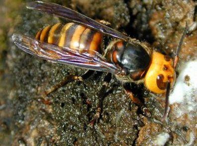 昆虫 研究家に関連した画像-04