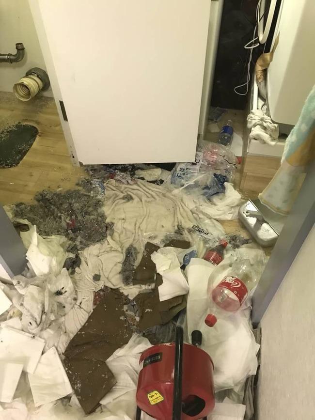 ペット トイレ 砂 猫砂に関連した画像-05