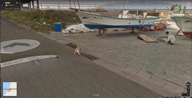 グーグル google ストリートビュー 犬 イッヌに関連した画像-03
