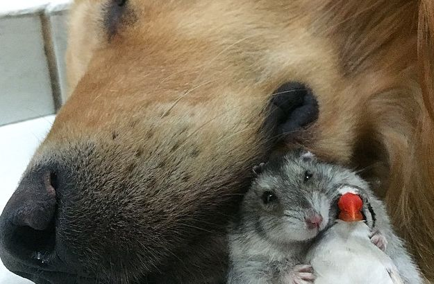 犬 ハムスター 小鳥に関連した画像-01