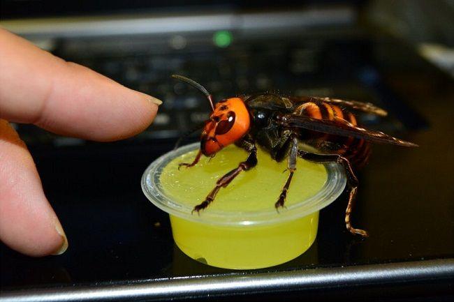 スズメバチ飼育に関連した画像-04