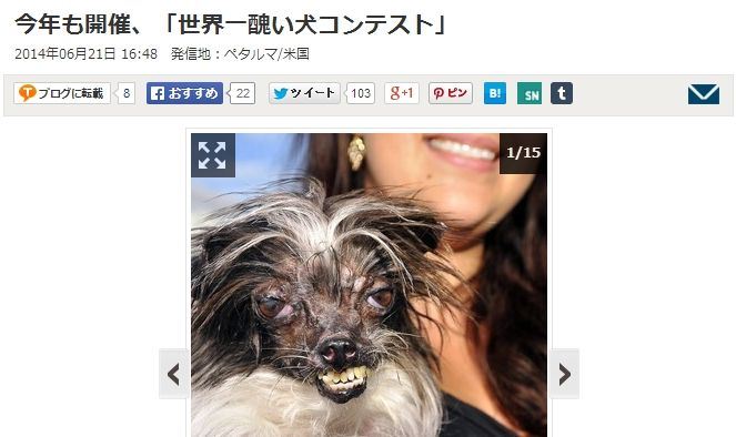 世界一醜い犬コンテストに関連した画像-02