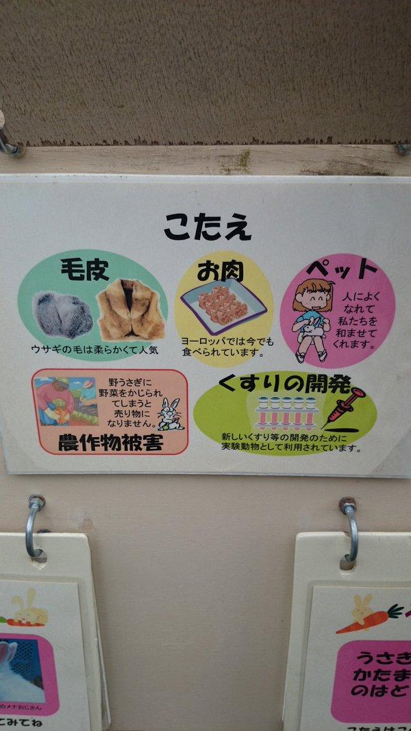 うさぎ 人間 利用 問題 クイズ 毛皮 ペット 食用に関連した画像-03