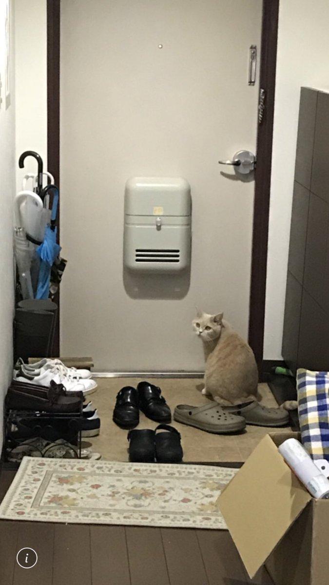 猫 可愛い 反応に関連した画像-02