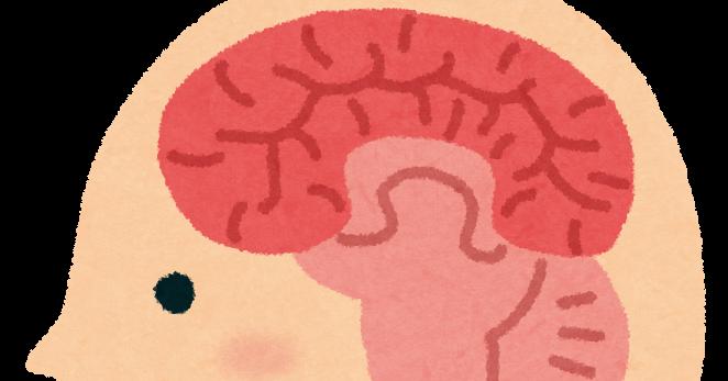 脳 脳みそ 女性 男性 知能指数に関連した画像-01