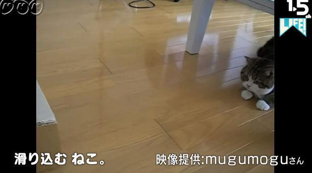 NHK ムロツヨシ 猫 LIFE コント 癒し動画に関連した画像-08