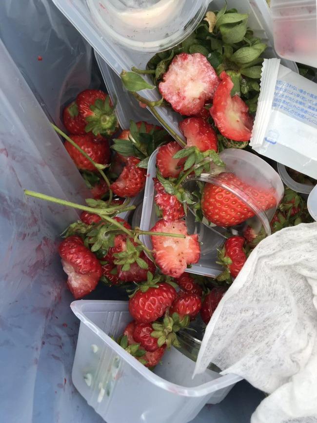 イチゴ イチゴ農家 ヘタ 贅沢食い 酷いに関連した画像-02