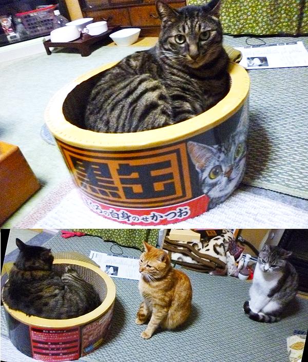 猫缶型爪とぎに関連した画像-02