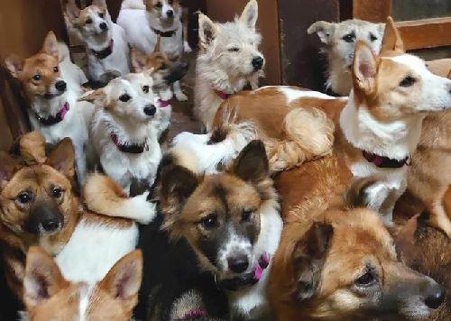 多頭飼育 島根 出雲市 犬 動物愛護団体に関連した画像-01