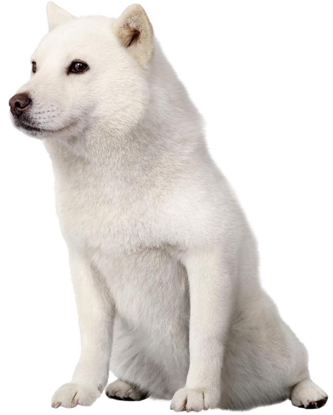 訃報 ソフトバンク カイくん 犬に関連した画像-01