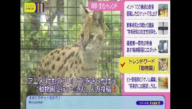 けものフレンズ NHKに関連した画像-02