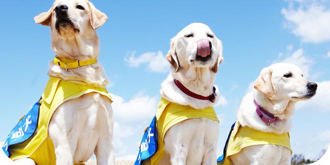 介助犬 1匹 飼い主の危機に関連した画像-01