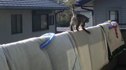 マンション ベランダ 布団 猫に関連した画像-01