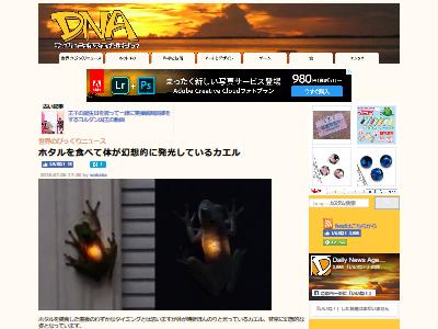 カエル ホタル 発光に関連した画像-02