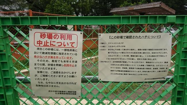 公園 砂場 使用中止 絶滅危惧種 ヤマトスナハキバチに関連した画像-03