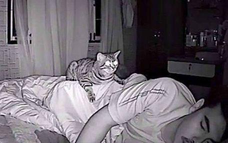 猫 就寝時 行動に関連した画像-01