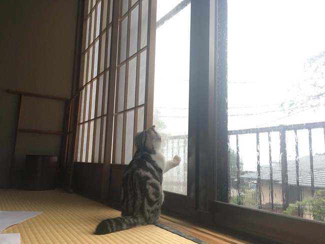 旅館 ネコ 猫 レンタル 泊まる まいきゃっと 湯河原に関連した画像-04