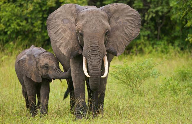動物園 ゾウ 石 女児 死亡に関連した画像-01