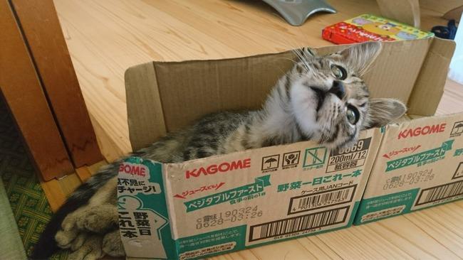 ソシャゲ 爆死 ガチャ 猫に関連した画像-02
