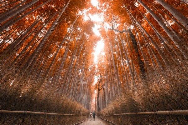 米紙 日本 魅力に関連した画像-10