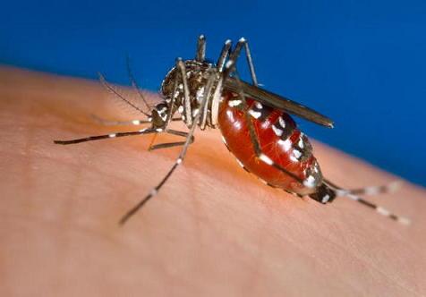 デング熱 蚊に関連した画像-01
