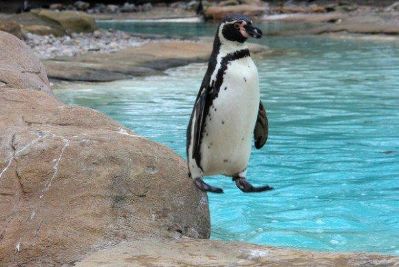 ペンギン ゲーム バグ 着地判定 動物に関連した画像-02