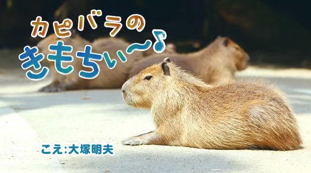 大塚明夫 声優 BL カピバラさん 動画 Youtube LIXIL MADEに関連した画像-02