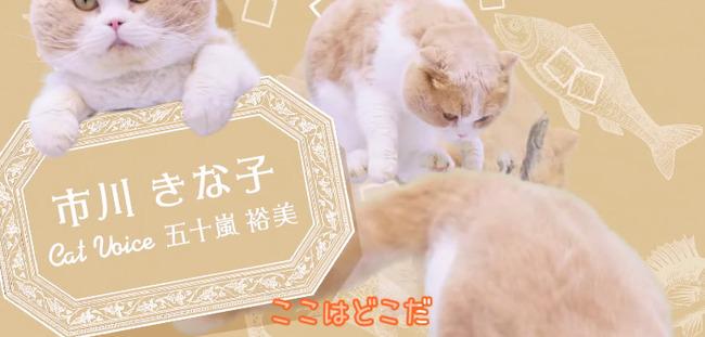 au ネコ にゃにゃにゃにゃ食堂 小岩井ことり 阿澄佳奈に関連した画像-05