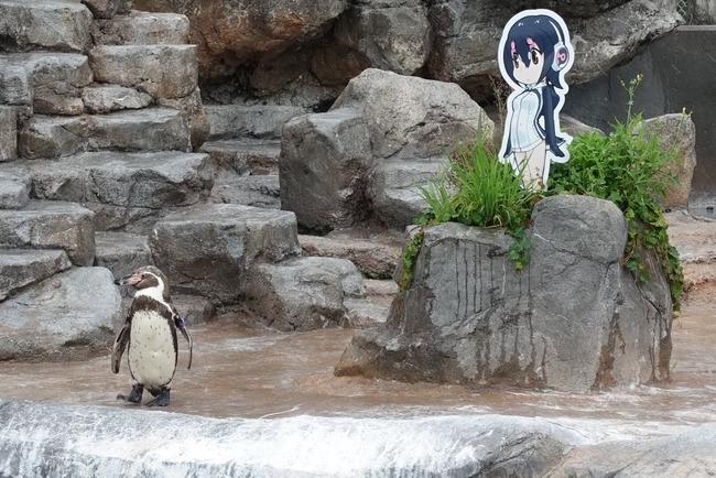 けものフレンズ 東武動物公園 グレープ君 フルル パネル 撤去に関連した画像-03