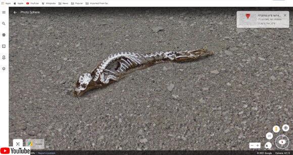 南極 謎生物 未確認生物 UMA 発見に関連した画像-03