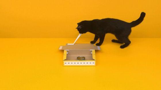 黒猫 組み立てに関連した画像-06