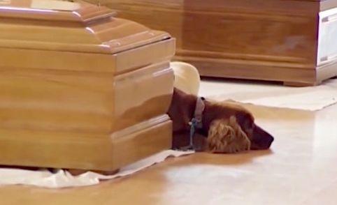 イタリア 地震 わんこ 犬 棺に関連した画像-01