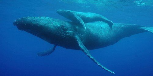 国際捕鯨委員会 IWC 脱退 商業捕鯨 批判 ボイコットに関連した画像-01