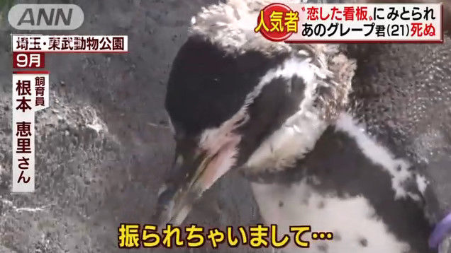 けものフレンズ けもフレ 東武動物公園 グレープ フルルに関連した画像-05